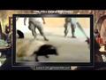 US-Soldaten töten wehrloses Schaf